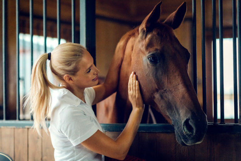 Horses don't love us as much as we love them: study